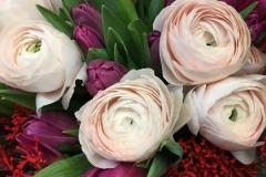 Renoncules - tulipes